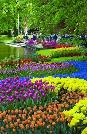 Amsterdam's Keukenhof Gardens With such vibrant colors and flowers of various heights, planted in a unique pattern...makes this garden spot spectacular!