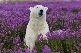Polar Bear (Animals Who Love Flowers | Petslady.com)