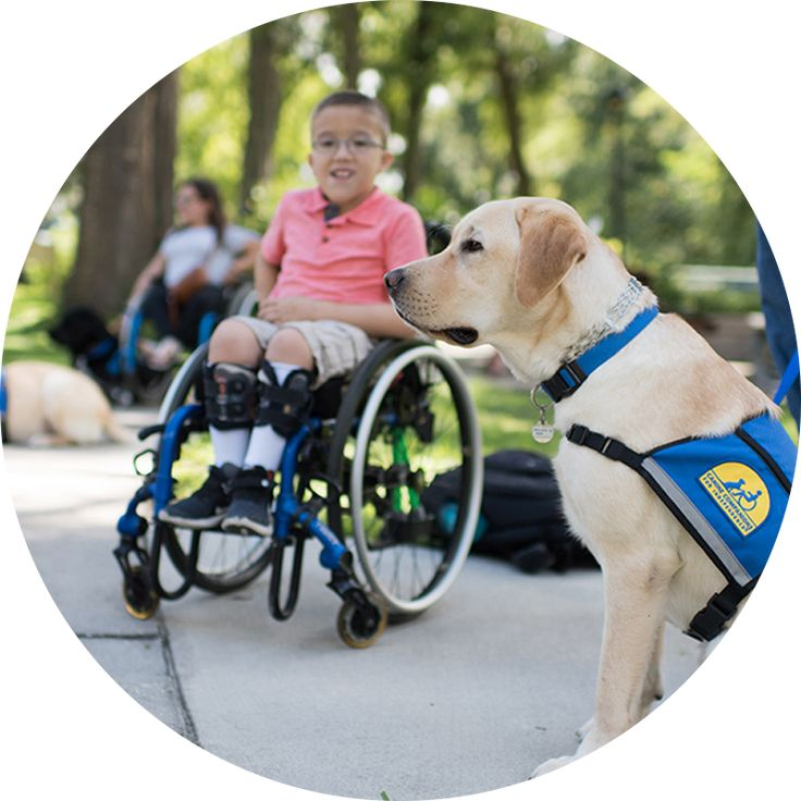 Make Every Day Independence Day Canine Companions for