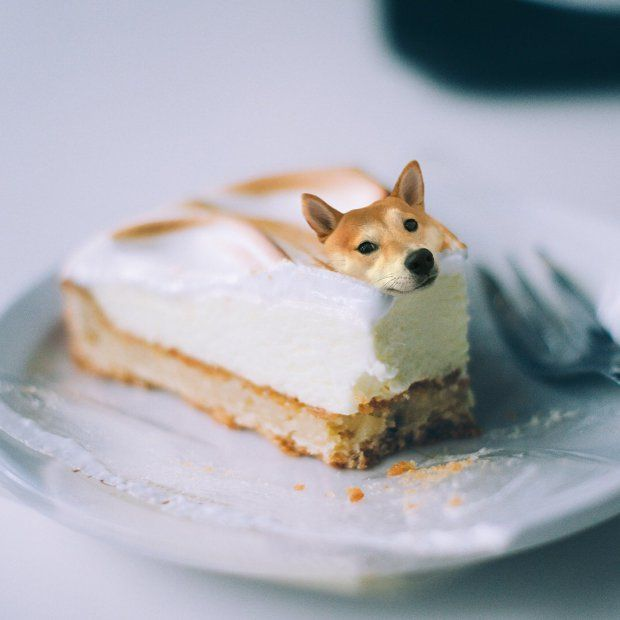 This Instagram Account Photoshops Unimpressed Dogs Into Food