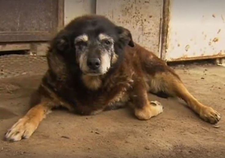 World's unofficial oldest dog dies at 30 years old. RIP Maggie, you will be missed.