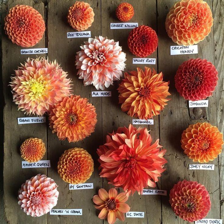 #Beauty #Bloom #Day #enjoying #Garden #oranges