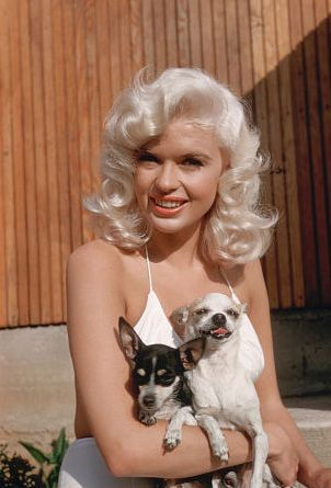 Jayne Mansfield and her chihuahuas!   The white one looks like my Mai Tai!