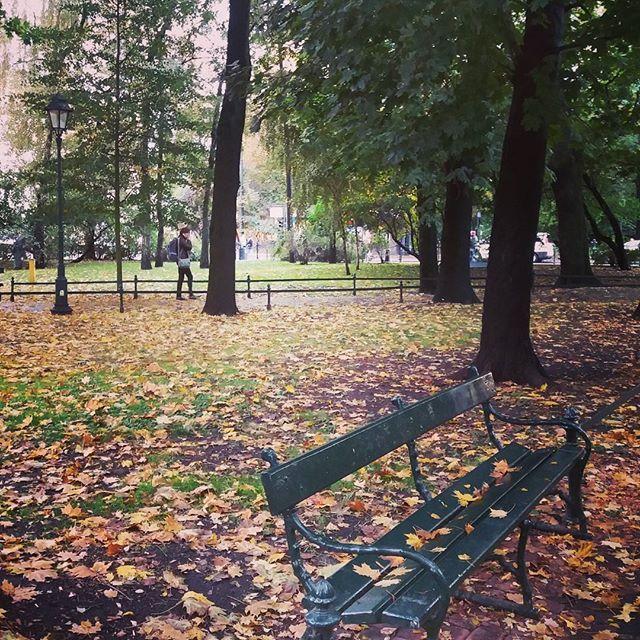 Jesienne planty. U góry jeszcze zielono, na dole już żółto 💛🍁🍂🌿🌰☔ #planty #krakow #jesień