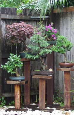 A mini Bonsai garden. I would use a corner of my brick house as a backdrop.