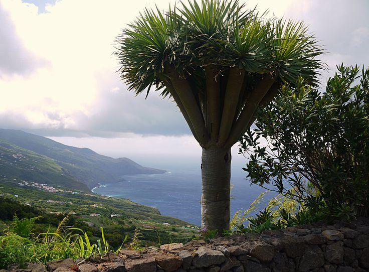 Ла Пальма – живописный остров вулканического происхождения, расположенный в северно-западной части Канарских островов.
