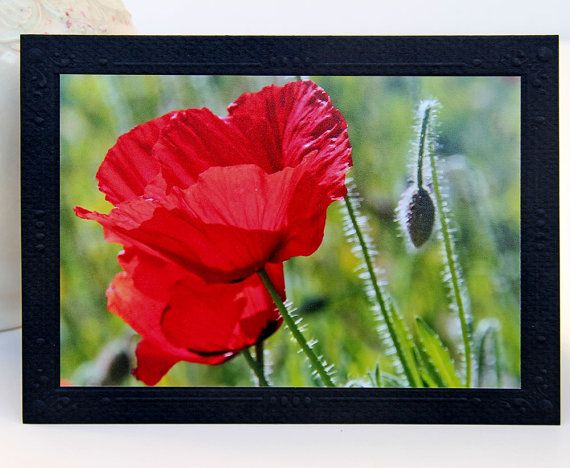 Préférence 25+ trending Poppy photo ideas on Pinterest | Poppy flowers, Red  SU96