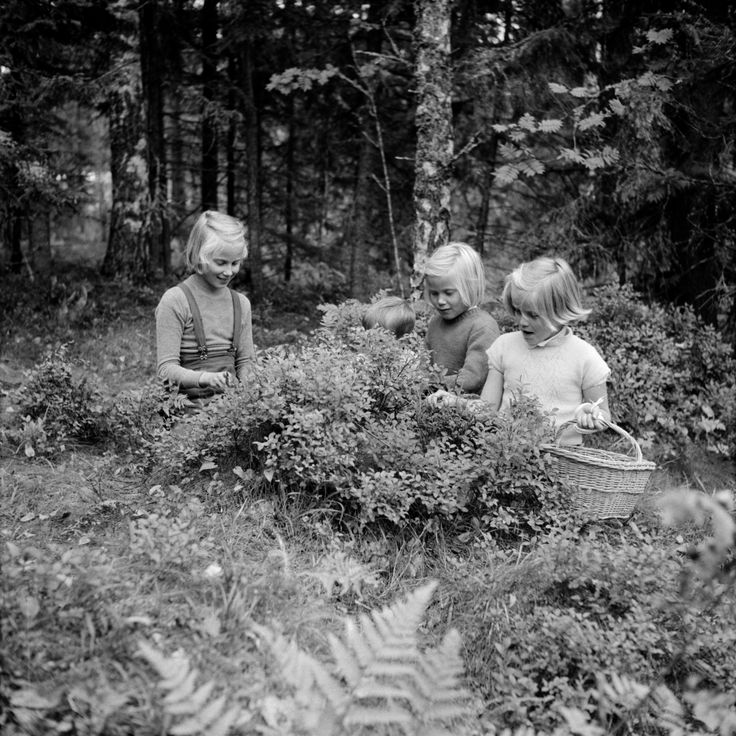 Tytöt keräävät marjoja kesällä 1956. Valokuvaaja tuntematon. Kuvaa käyttäessäsi mainitse kuvalähde: Valokuvaajan nimi/Suomen valokuvataiteen museo/Alma Media/Uuden Suomen kokoelma Kuvan tunnus museon kokoelmissa: d2004_17_r1_r56-6555_2.tif