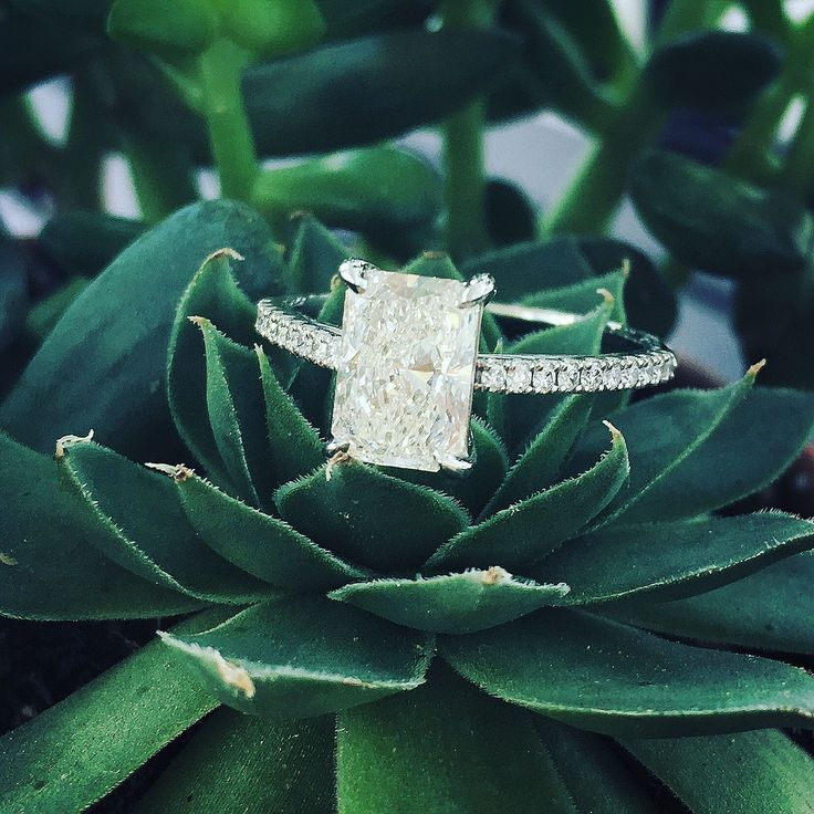 1.5 carat elongated radiant cut engagement ring with thin pave diamond band inspired by Tiffany Novo. I love that it has the shape of an emerald cut but the sparkle of a brilliant cut or cushion cut. <3