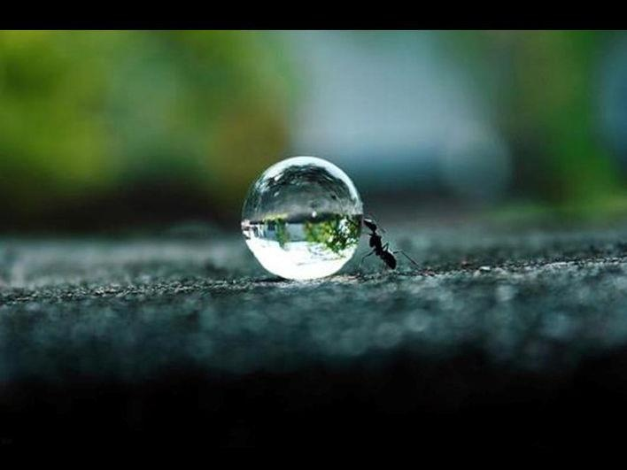 11b2152dde00c1ddf055a632cc21dc5f--insects-water-droplets.jpg