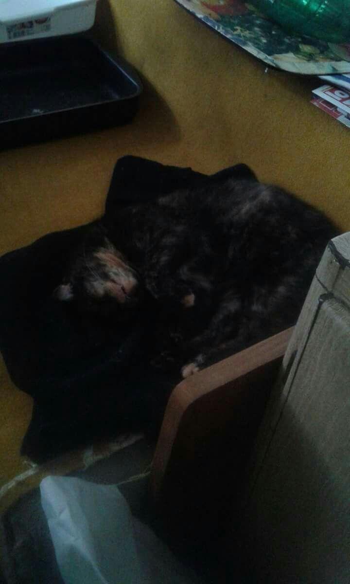 Mircikénk,már 11 éves,most már sokat alszik!