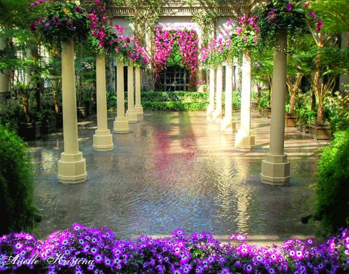 Experience the world of Longwood Gardens . . . a place to see dazzling displays that elevate the art of horticulture . . . a place to enjoy performances that inspire!