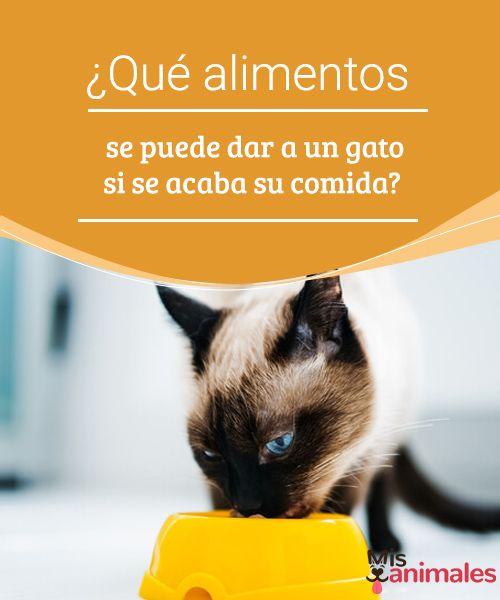 ¿Qué alimentos se puede dar a un gato si se acaba su comida?  Si se ha acabado la comida de tu gato y ya es tarde para ir al mercado no te preocupes, puedes improvisar con lo que tengas en casa. #alimentos #gato #casa #alimentación