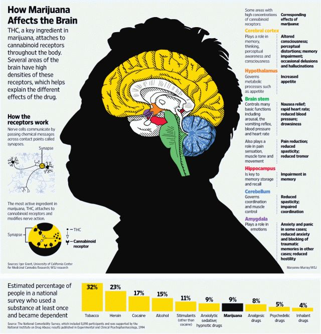 12 best infographics of drugs and alcohol images on pinterest info drugs in the workplace effects of marijuana on the brain facts about human brain how marijuana affects the brain ccuart Image collections