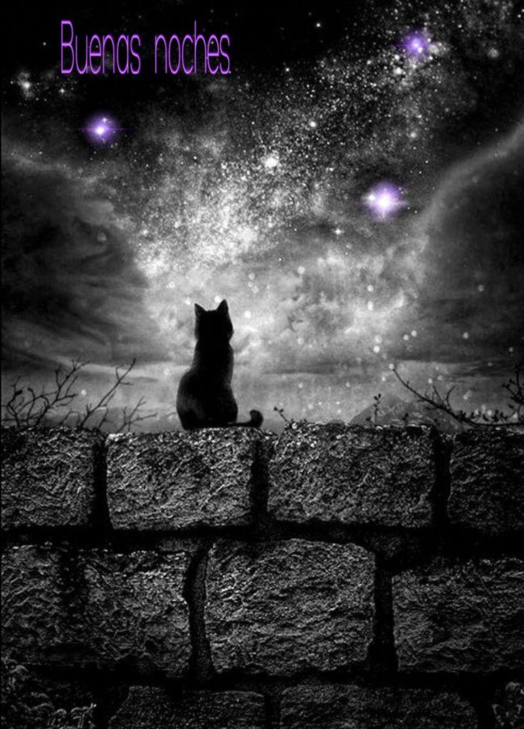 Night Cat Productions
