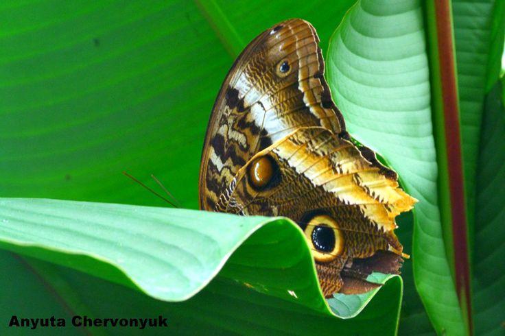Волшебный мир…Бабочки в Сантильяна-дель-Мар. — Mariposas, Zoo Santillana del Mar. | Испания неизведанная.