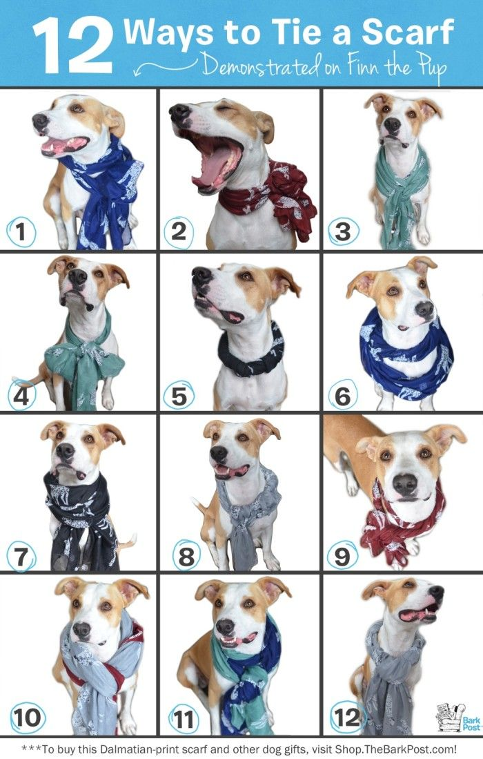 12 Ways to Tie a Scarf-- demonstrated on a dog