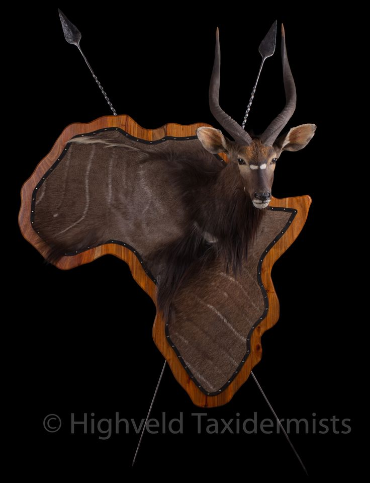 Nyala 3D Pedestal Trophy Mount #taxidermy #taxidermyart #hunting