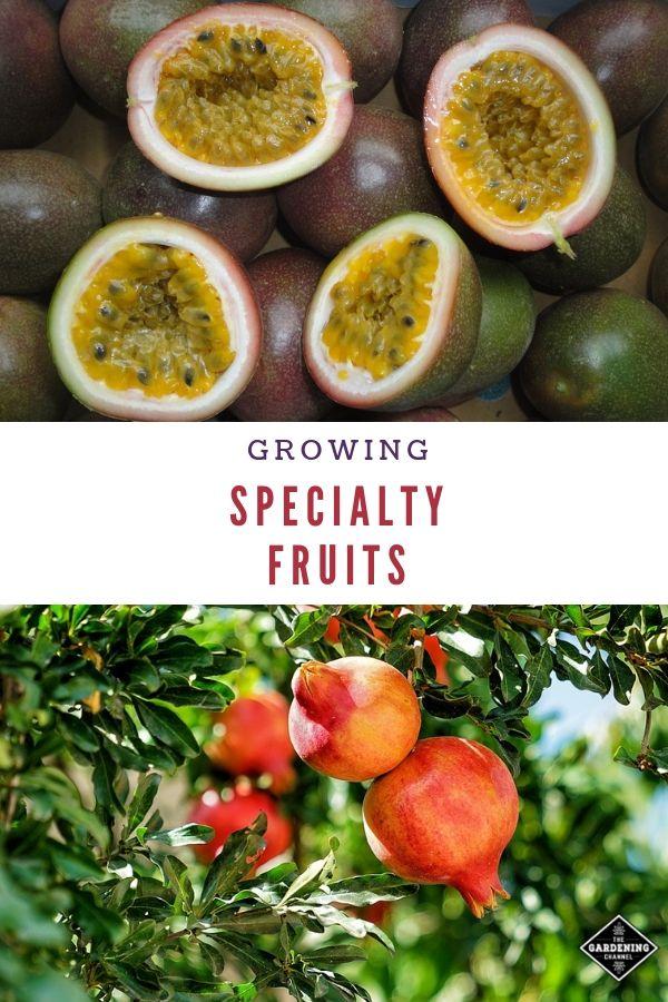 Pin On Fruit Gardening Ideas