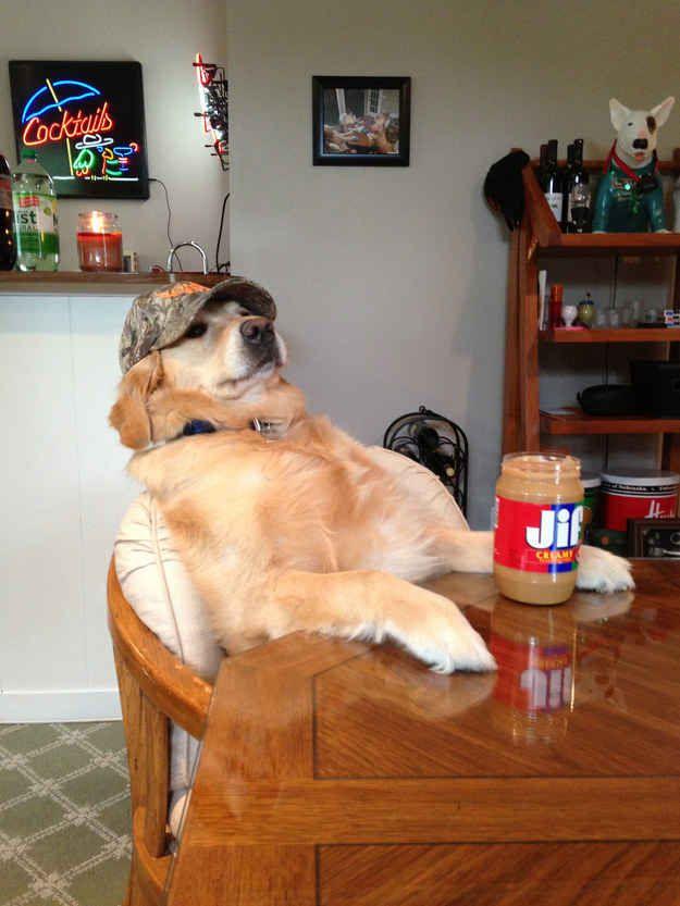 E esse cachorro que pode ser seu tio desajeitado nos jantares da família.