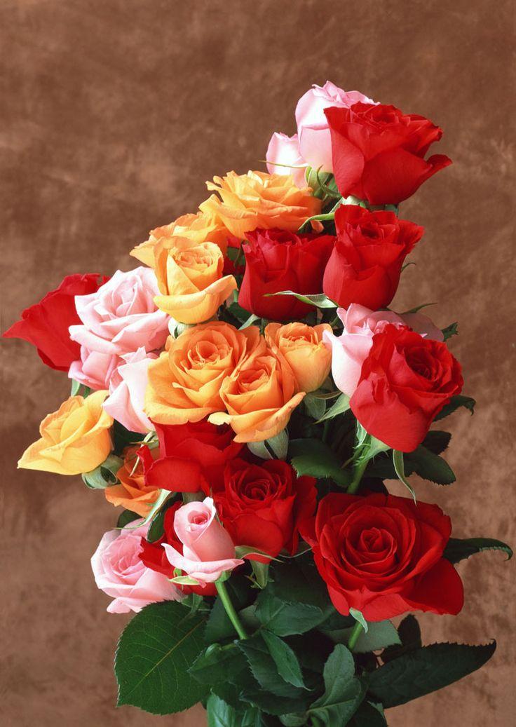 Картинки красивых цветов на день рождения женщине
