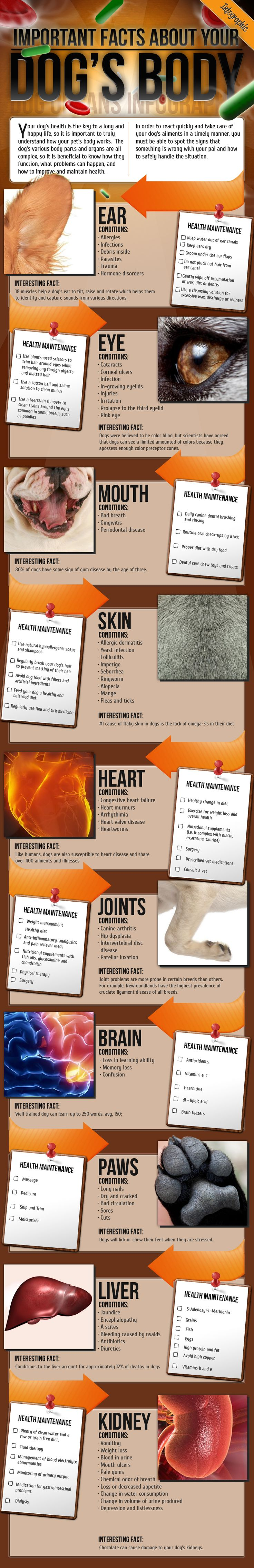 Important facts about your dog's body /.,.\ Info to help keep the furry ones happy & healthy.