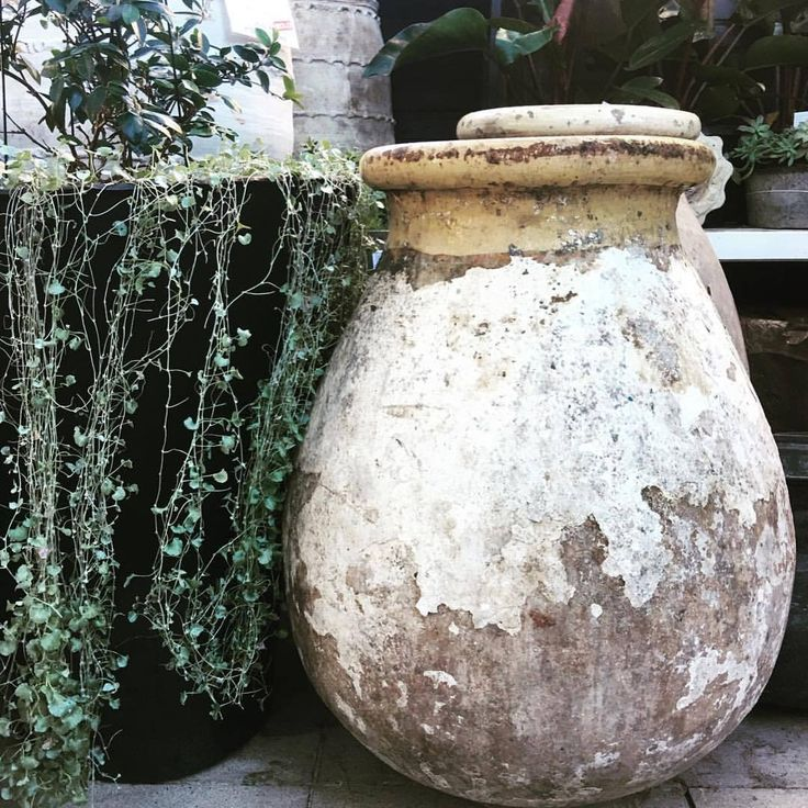 New Marseille Jars at LuMu Double Bay. These exquisite antiquities have been exclusively sourced for LuMu by the good guys at @gathercoaustralia LuMu Interiors | 14 Transvaal Ave, Double Bay | WEBSITE: www.lumuinteriors.com | BLOG:...