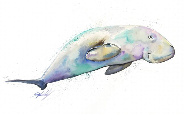Dugong in watercolour, part of the 'Tropical Waters' range by Stephanie Elizabeth Artwork.