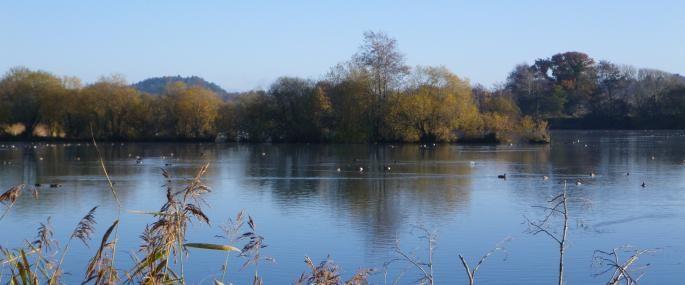 Blashford Lakes, Ellingham, near Ringwood (Hampshire & Isle of Wight Wildlife Trust)