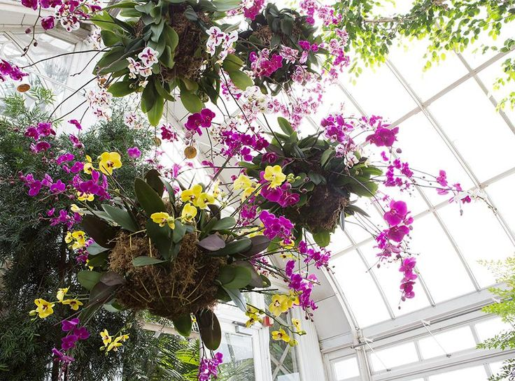 64 Best New York Botanical Gardens Usa Images On Pinterest Orchid Show Botanical Gardens And