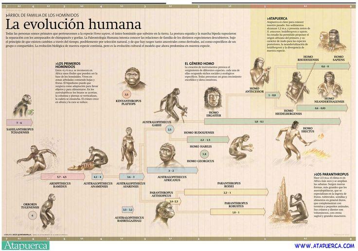 La Evolución humana - ATAPUERCA.