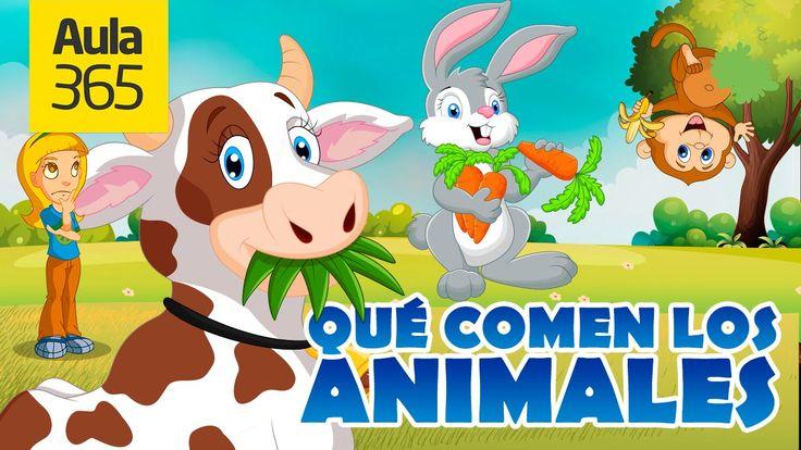 ¿Qué comen los animales Herbívoros, Carnívoros, Omnívoros? | Videos Educ...