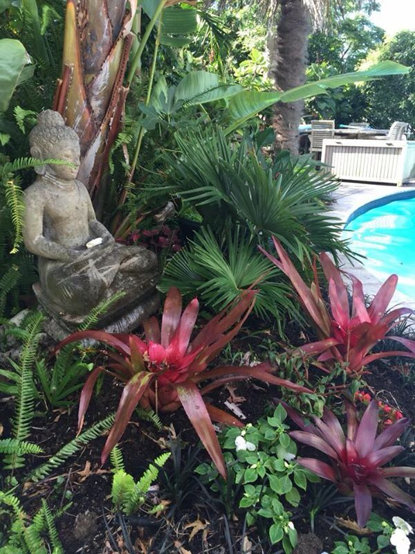Red bromeliads poolside, sub tropical garden.