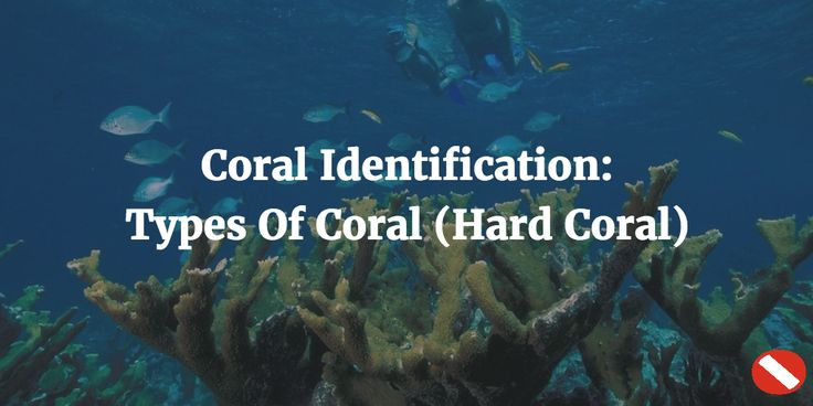 Hard coral is just one type of coral found in our oceans. Learn about these nine different species.