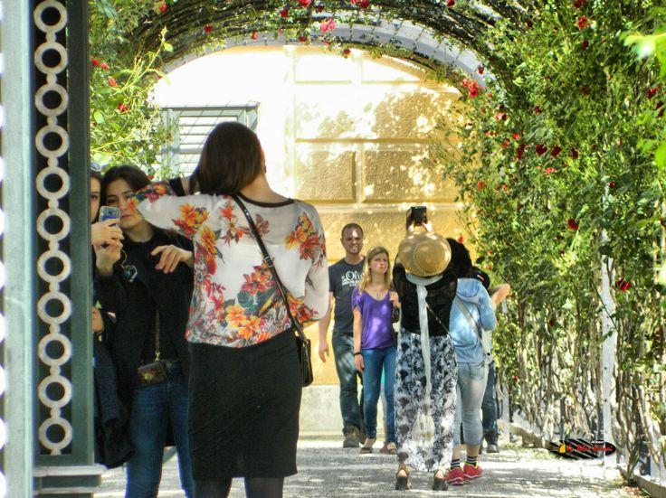 Wien, Schönbrunn Palace Garden, Nikon Coolpix L310, 83.7mm, 1/125s, ISO220, f/5.7, +1.0ev, polar filter, HDR photography, 201605211623