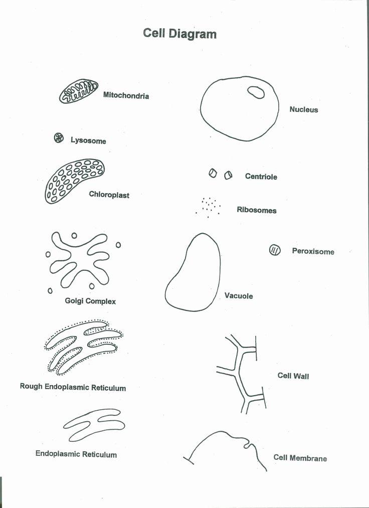 Cells Alive Worksheet Answer Key Fresh Cells Alive Plant