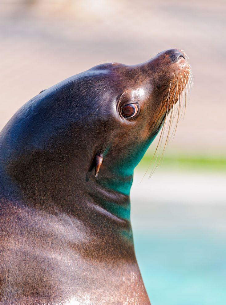 49 best · Amor Animal · images on Pinterest   Amor animal, Animales ...