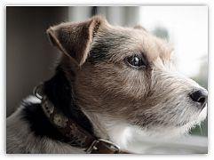 Маленькие собаки - большой уход У маленьких собак большое сердце. Конечно, малыш нуждается в хозяйской защите, но, сколько же тепла и любви он готов подарить взамен вашему вниманию.  Обитатели городских квартир часто заводят собак миниатюрных пород. ... http://c.cpl1.ru/7kNM