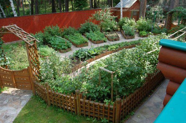 Красивый огород. Галерея  фото