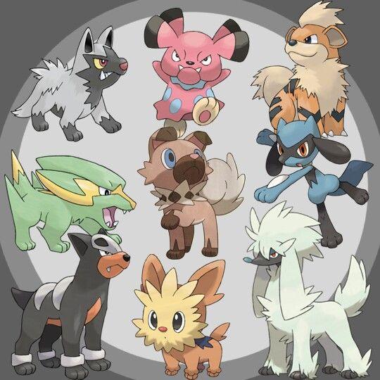 Love the dog like Pokemon