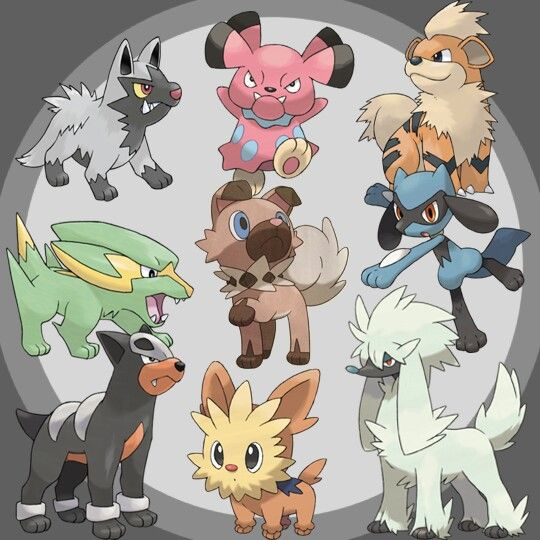 Love the dog like Pokemon