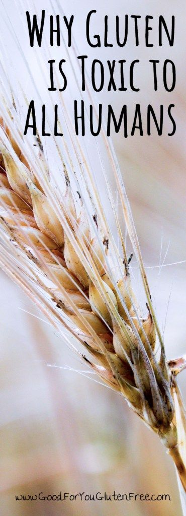 Why Gluten is Toxic to All Humans - Good For You Gluten Free
