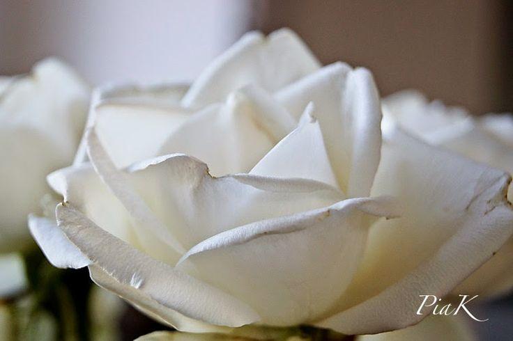 PiaK: En doft av rosor...