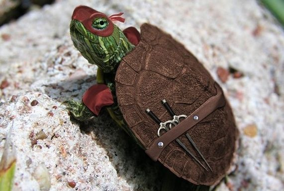Ninja Turtle: Real Life, Ninjas Turtles, Awesome, Ninjaturtl, Tmnt, Teenage Mutant Ninjas, Raphael, Funny Stuff, Animal