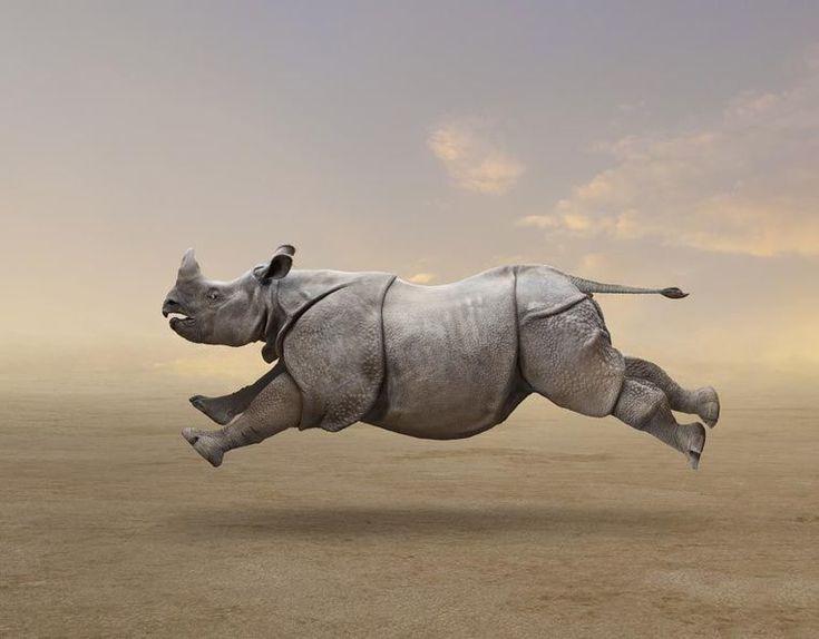 Картинки про, прикольный носорог картинка