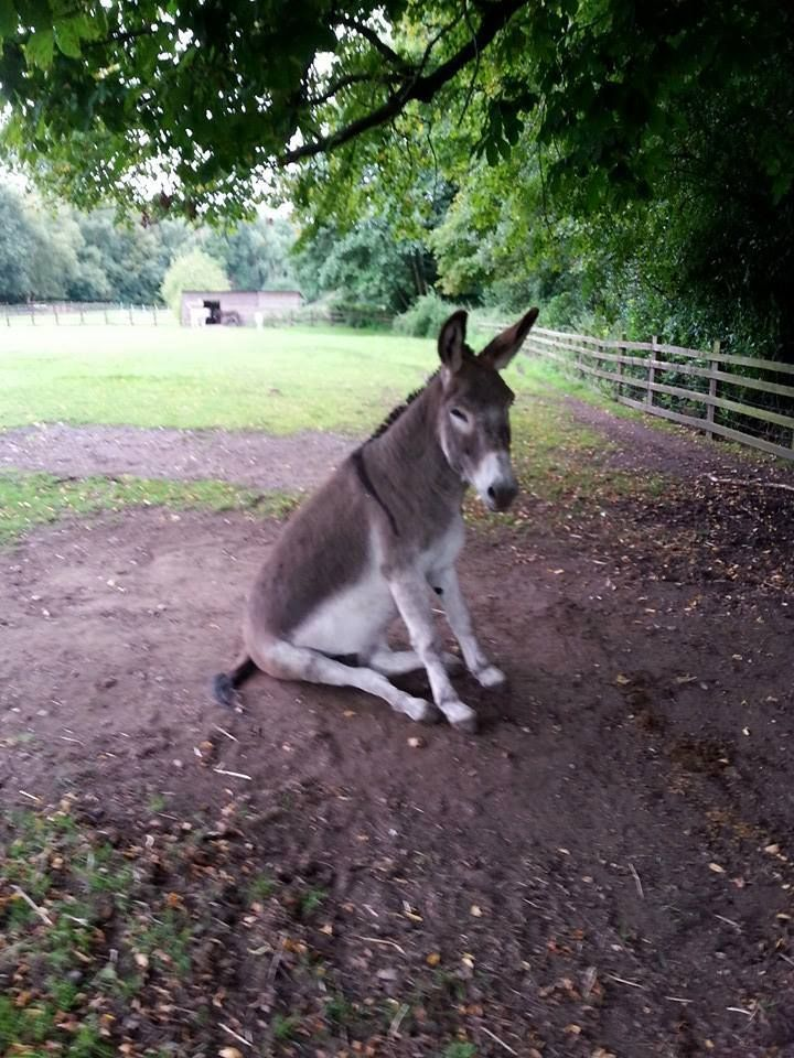 379 Just before the picture was taken, this donkey received some news. What was it? Was it good or bad? Tell the story.
