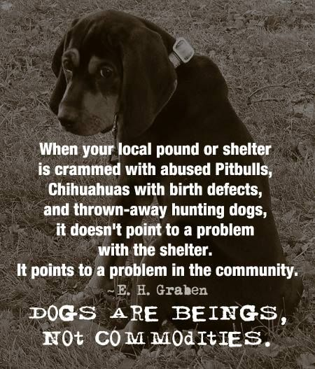 Pinterest Animal Quotes: 1267 Best Dog Rescue Fundraising Ideas Images On Pinterest