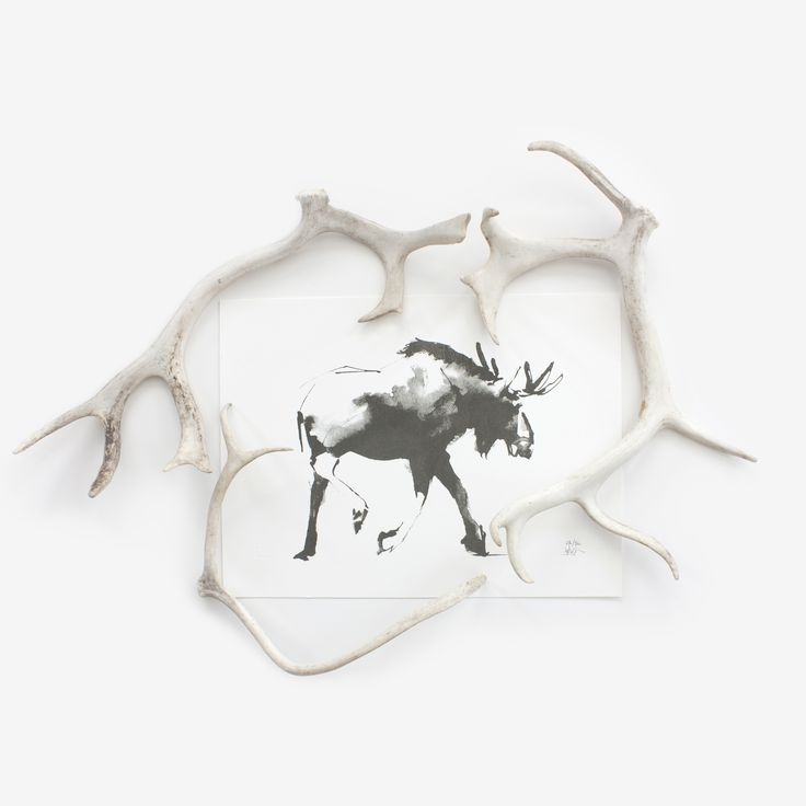 Horns on Horns. Moose Fine Art Print on Paper. Teemu Järvi Illustrations http://www.teemujarvi.com/en/shop/paper-prints/73-moose.html