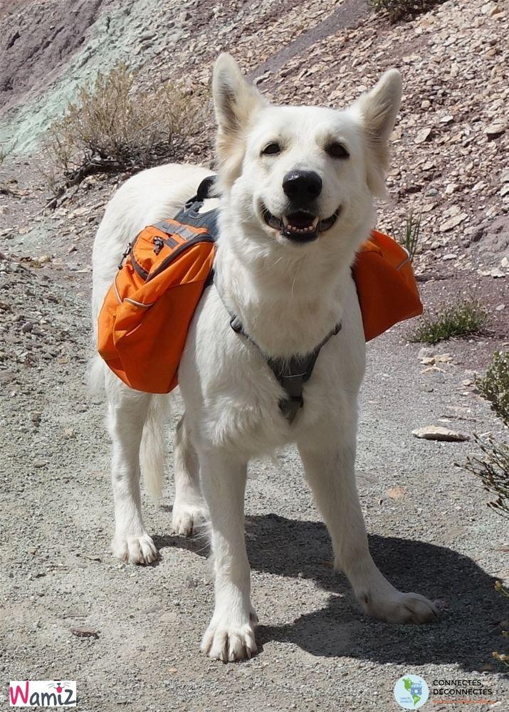 [Road trip] Voyager avec son Berger Blanc Suisse, première étape - Voyager avec son chien - Wamiz