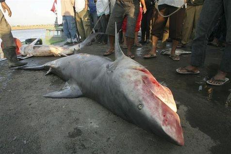 31/07/2012 - Réunion : Saint-Leu met la tête des requins à prix après la mort d'un surfeur